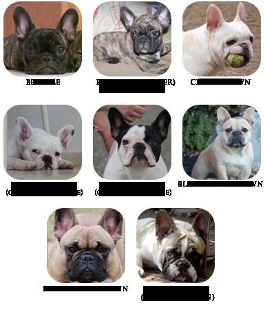 Dog Breeders In Hastings County Ontario